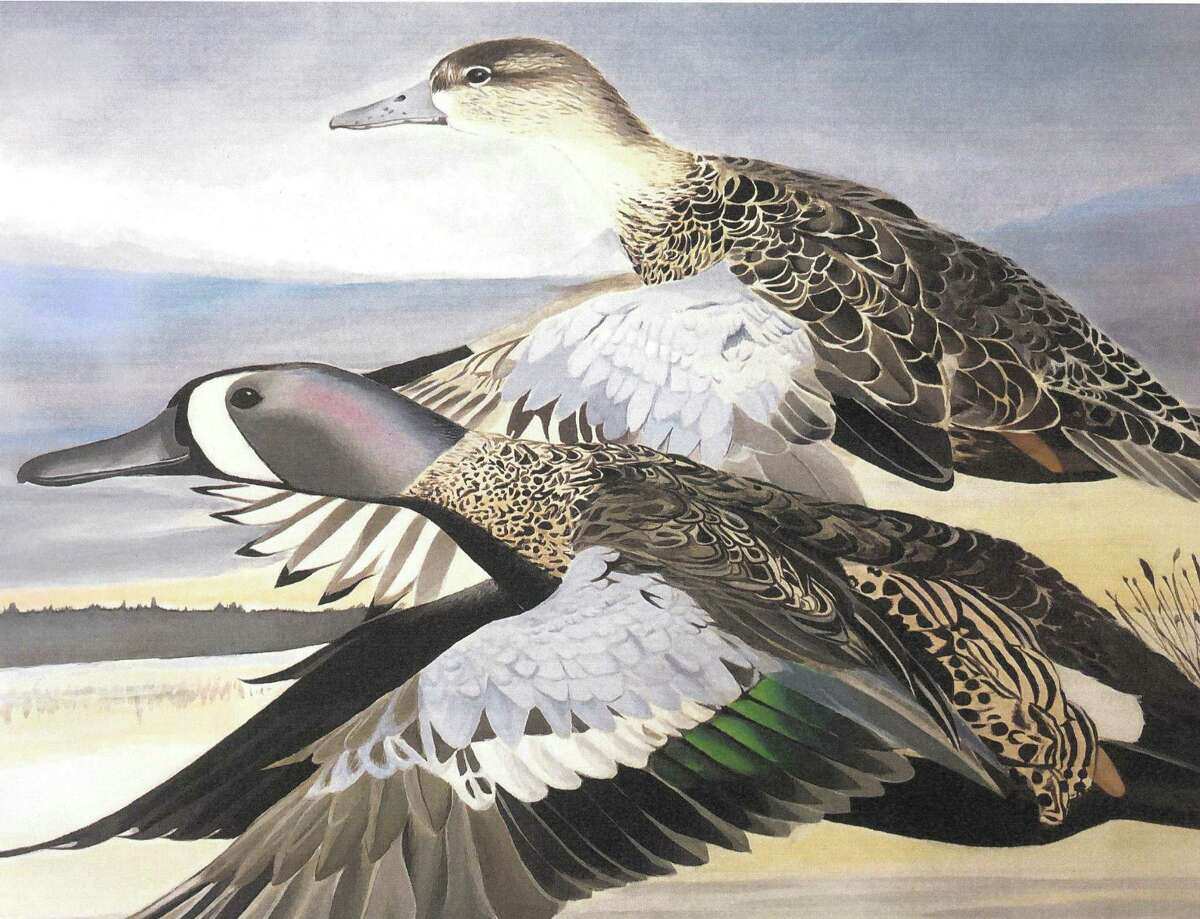 The 2019 Connecticut Junior Duck Stamp Art Contest winner was Sophie Archer whose winning image featured a pair of flying blue-winged teal ducks. Her painting was judged the best in Group 3, which encompasses students in grades 7-9. Her artwork appears on the 2020 Connecticut Junior Duck Stamp and is part of an exhibit traveling around the U.S. with all the state