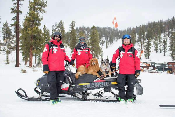 Peak and Wheeler are two of Heavenly's six snow rescue dogs, trained to assist search parties during avalanches.