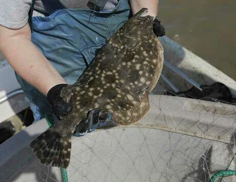 Complete closer of flounder season and a minimum size limit increase have been proposed to combat the loss in southern flounder numbers.