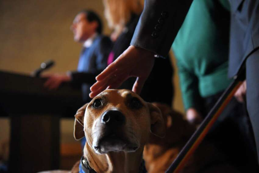 Kerouac, a dog from the Mohawk-Hudson Human Society, is the recipient of affection during a press conference where Sen. Deputy Leader Michael Gianaris announced support for his anti-puppy mill legislation on Monday, Feb. 3, 2020, at the Capitol in Albany, N.Y. The bill would ban the sale of cats, dogs and rabbits in pet stores. (Will Waldron/Times Union)