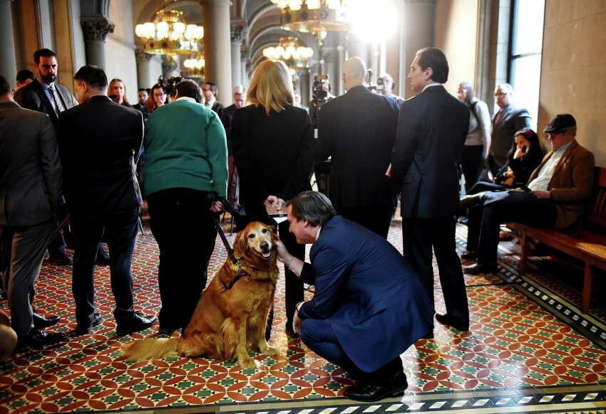Senate Deputy Leader Michael Gianaris takes a moment to pet Watson, a dog from the from the Mohawk-Hudson Human Society, during a press conference where Sen. Gianaris announced support for his anti-puppy mill legislation on Monday, Feb. 3, 2020, at the Capitol in Albany, N.Y. The bill would ban the sale of cats, dogs and rabbits in pet stores. (Will Waldron/Times Union)