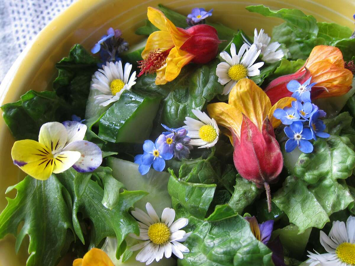 Flowers of red-and-yellow abutilon, English daisy, forget-me-not, and viola brighten a winter salad.