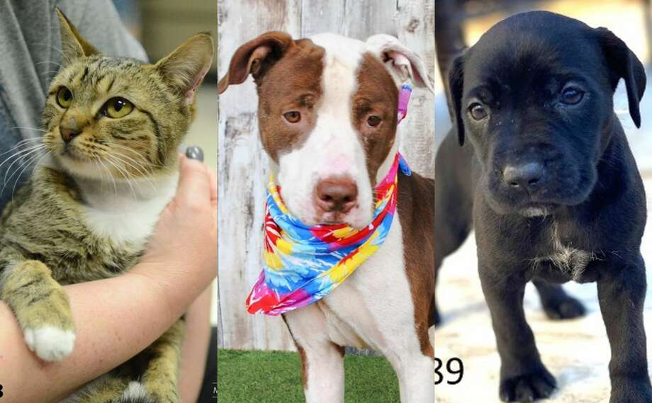 All pet adoption fees at the Montgomery County Animal Shelter will be waved this weekend thanks to a generous donation from an animal welfare nonprofit.>>>See more for adoptable pets at the shelter... Photo: Montgomery County Animal Shelter
