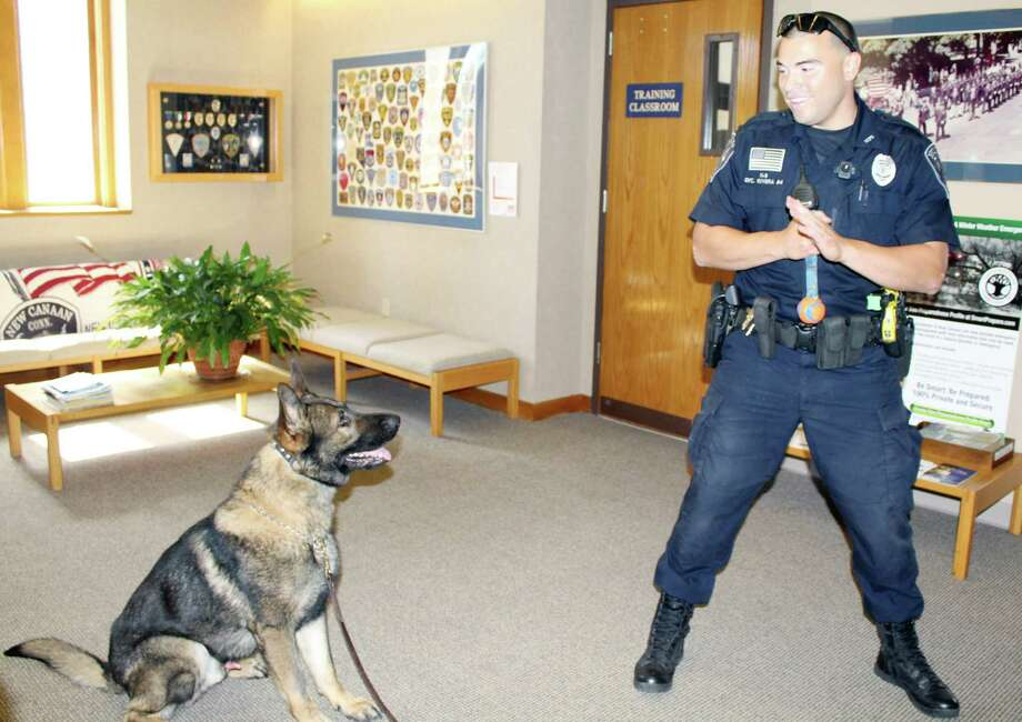 Officer David Rivera rewards his canine, Apollo, for successfully completing a narcotics detection exercise in the lobby of the New Canaan police station in July 2016. Photo: Hearst Connecticut Media File Photo / New Canaan News
