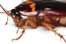 At the San Antonio Zoo's Cry Me A Cockroach Valentine's Day event, the brokenhearted can pay $5 to name a cockroach or $25 to name a rodent after their ex and then watch as the tasty morsel is fed to one of the zoo's hungry, hungry insectivores.