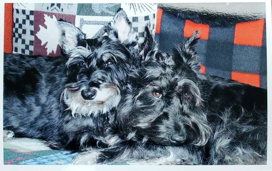 Although emergency veterinary care might not have saved Aggie and Sterling, Kim Fortune said it would have improved the quality of life for her family. (Courtesy Photo)