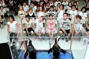 Students at St. Bernadette School in New Haven view penguins from Mystic Aquarium in the auditorium of the auditorium of their school on 6/1/2011. Photo by Arnold Gold/New Haven Register AG0413B