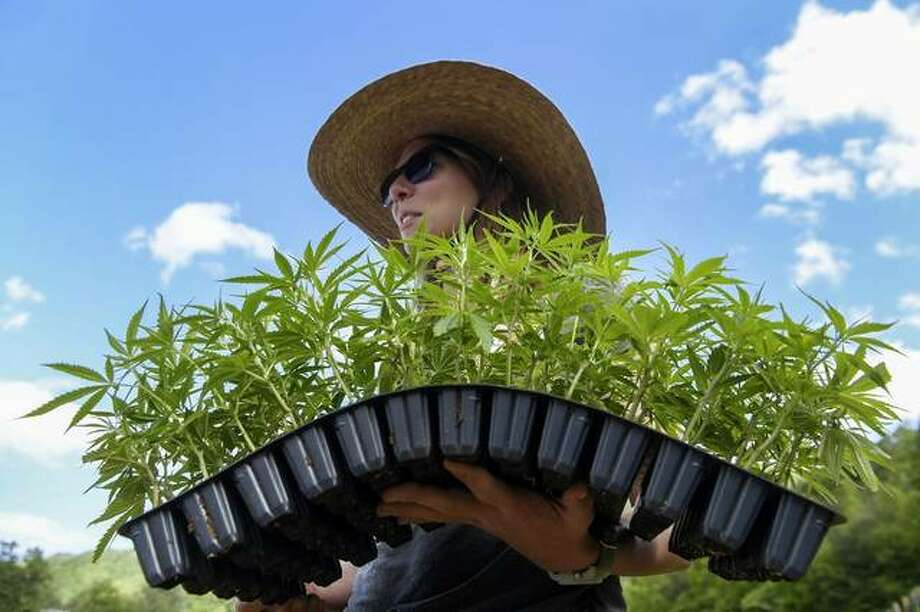 In this May 13, 2019 photo, Meagan Coneybeer-Roberts, a Ph.D. researcher and part of the Alternative Crops and Organic Research group at NC State, gives volunteers tips for planting before placing hemp plants into the ground at Franny's Farm in Leicester, N.C. (Angela Wilhelm/The Asheville Citizen-Times via AP)