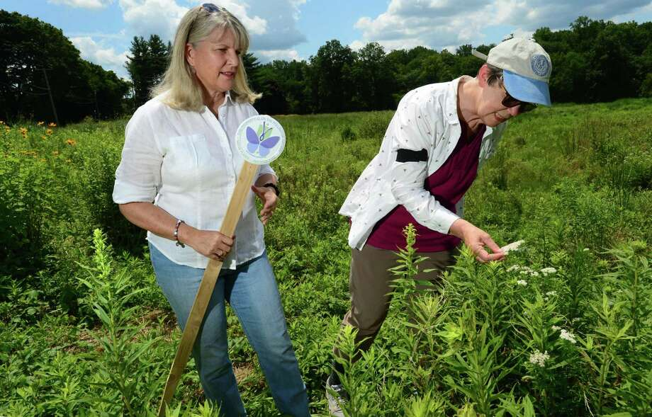 Pollinator Pathway pioneers, Mary Ellen Lemay, chairman of the Trumbull Conservation Commission, and Kimberly Stoner, who works in the Department of Entomology at the Connecticut Agricultural Experiment Station, inspect species of native flowering plants at Keeler Ridge Meadows Wednesday, July 24, 2019, in Wilton, Conn. Photo: Erik Trautmann / Hearst Connecticut Media / Norwalk Hour