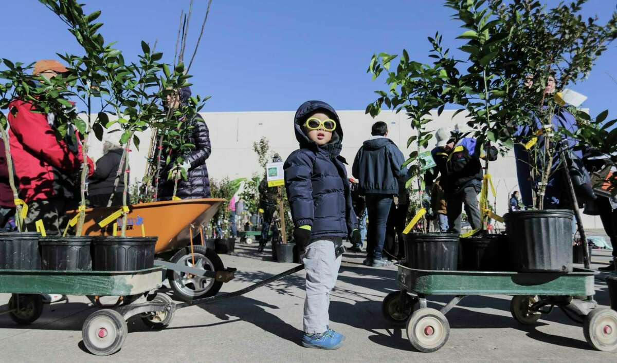 Jeremy Han, 3, of Sugarland waits in line with his family's purchase during Urban Harvest's 18th Annual Fruit Tree Sale in 2018, in Houston.