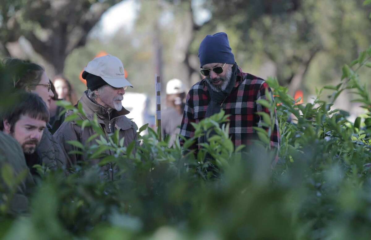 Volunteers help attendees pick out citrus trees at Urban Harvest's annual fruit tree sale in the parking lot of Houston Community College Southwest Loop Campus on Saturday, Jan. 13, 2018. ( Elizabeth Conley / Houston Chronicle )