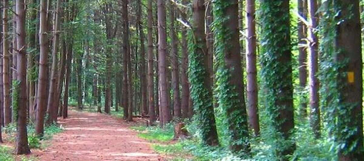 Shelton Trails Committee has planned a work party on the Rec Path on Saturday, June 12.
