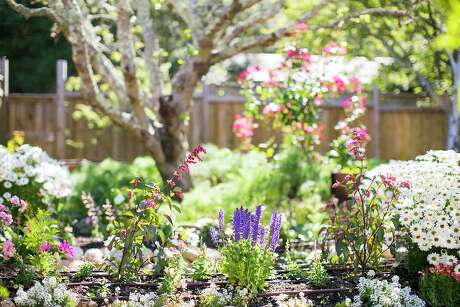 Even with the cold, plenty is blooming in San Antonio gardens.