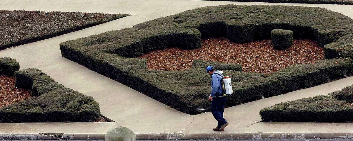 An employee of Superior Lawn Maintenance Inc. walks along spraying the trimmed landscaping that boarders MLK Parkway by Lamar University. Some of the plants were damaged by the cold temperatures causing the patterns to look differently then normal. Dave Ryan/The Enterprise