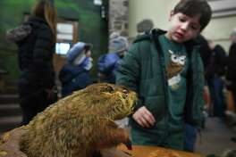 Leopold Riano, 6, of Westport, checks out a stuffed groundhog during an afternoon of Groundhog Day activities at the Ansonia Nature Center in Ansonia on Sunday, February 2.