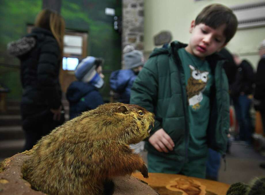 Leopold Riano, 6, of Westport, checks out a stuffed groundhog during an afternoon of Groundhog Day activities at the Ansonia Nature Center in Ansonia on Sunday, February 2. Photo: Brian A. Pounds / Hearst Connecticut Media / Connecticut Post