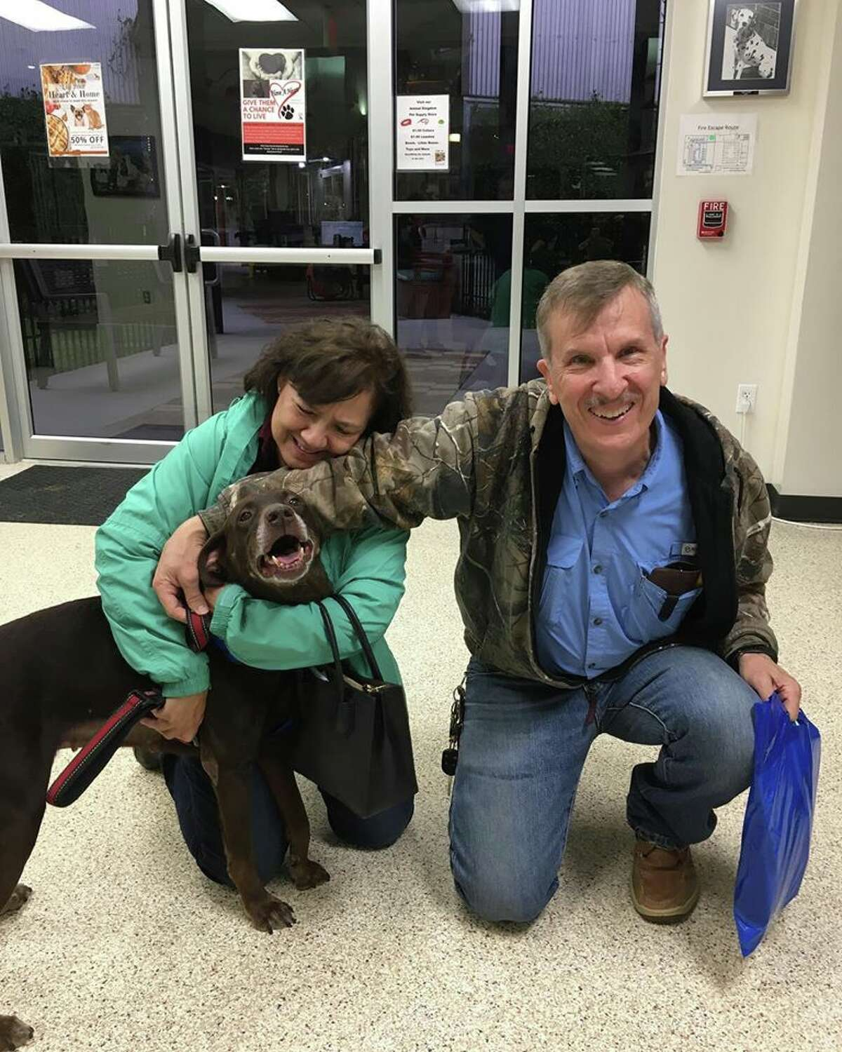These Houston pets were adopted from the Houston Humane Society in 2019 and 2020.