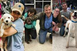 PHOTOS: Houston shelter pets find their new familiesThese photos of Houston area animals finding their forever families is sure to brighten your day.>>>See more for adorable photos of Houston shelter pets and their new owners...