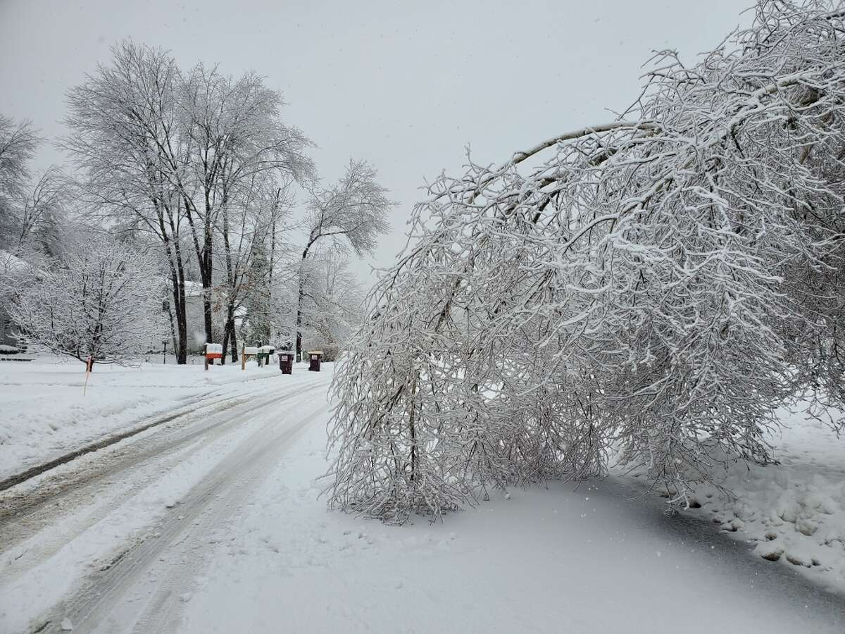 A combination of snow and ice brought this tree low in Saratoga Springs on Friday. A combination of ice, snow, and wind on Friday caused widespread power outages across eastern upstate New York.