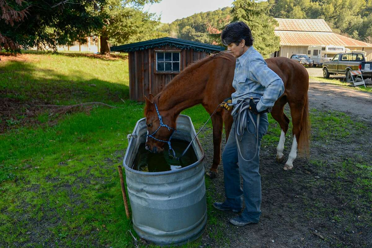 Renee Dyer, who had a dream freelance job as a master handler for a nonprofit that does equine therapy with dent patients before AB5 went into effect, cares for her horses at Rancho de Los Amigos where she boards her horses on February 7, 2020 in Castro Valley, Calif.