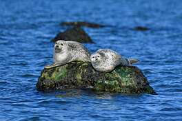 Seal-Spotting and Birding Cruises will be held Feb. 15 at  9:30 a.m. and Feb. 16 at 10:30 a.m.at the Maritime Aquarium, 10 North Water Street, Norwalk. Tickets are $26.50-$31.50. For more information, visit maritimeaquarium.org.