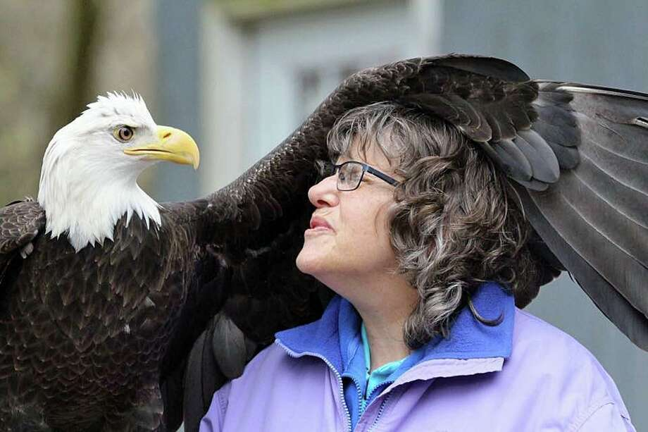 Atka, a bald eagle, missing since Monday, Feb. 10, 2020 has been found safe. The search for the eagle began early Monday after the raptor disappeared from the Horizon Wings Raptor Rehabilitation and Education center in Ashford. Because of an injured wing, the eagle is unable to fly. Atka is seen with Mary-Beth Kaeser, the owner and founder of the center. Photo: Horizon Wings Raptor Rehabilitation And Education Center Photo