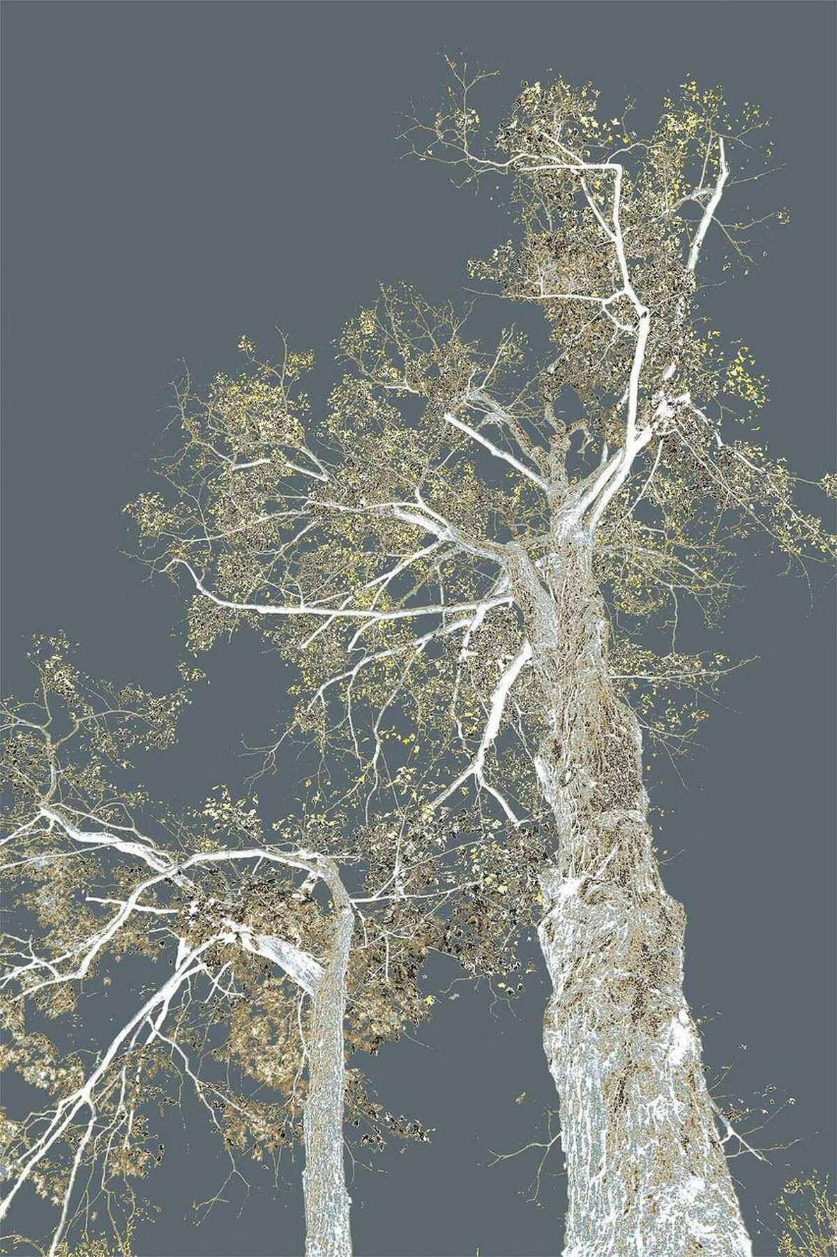 Two Stories is another digital photo of trees by Wilton artist Nancy C. Woodward.