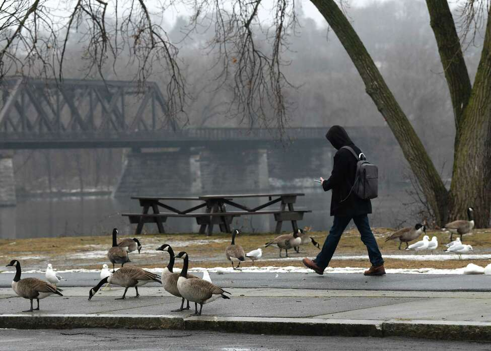 A pedestrian walks through a cluster of geese and gulls along the Mohawk-Hudson Bike Hike Trail at the Corning Preserve on Tuesday, Feb. 11, 2020 in Albany, N.Y. (Lori Van Buren/Times Union)