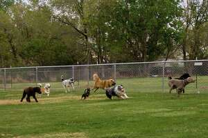 The Friends of the Litchfield Dog Park are hoping to use a piece of town property for a place to play with their pets.