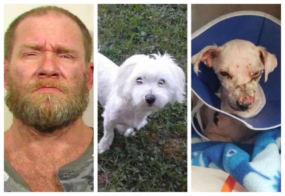 Johnson, and photos of Charlie, a Maltese mix, before and after the alleged abuse.