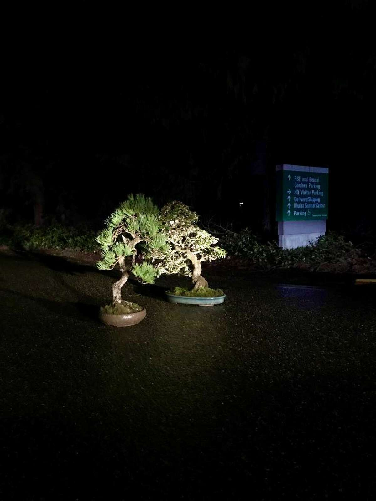 """Two bonsai trees stolen Sunday were returned to the Pacific Bonsai Museum after the museum's director promised """"no questions asked,"""" if returned."""