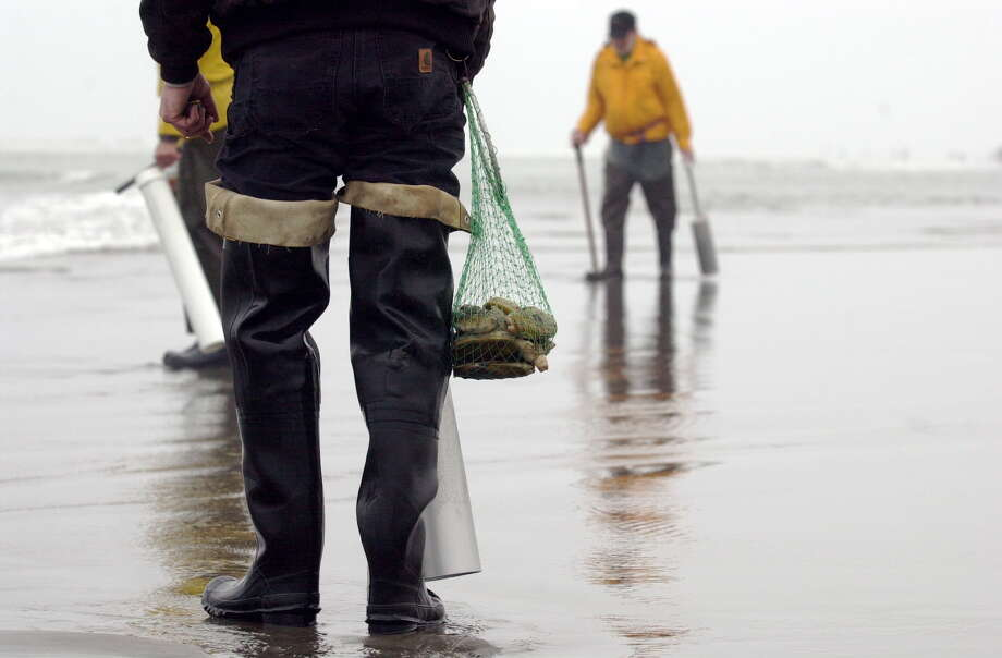 Clam digging at Long Beach. Photo: Long Beach Peninsula Visitors Bureau