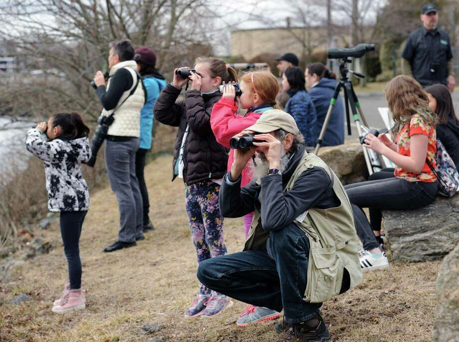 Help count birds from 1 to 2 p.m. Fridayat Grass Island Park in Greenwich. Join naturalists from the Greenwich Audubon Center as they count waterbirds and land birds in Greenwich Harbor as part of the Cornell Lab of Ornithology's annual Great Backyard Bird Count. Ducks, geese, loons and gulls are some of the birds expected to seen as they spend the winter on Long Island Sound. For questions and to RSVP, contact Ryan.MacLean@audubon.org or call 203-930-1351. Photo: File. / Hearst Connecticut Media / Greenwich Time