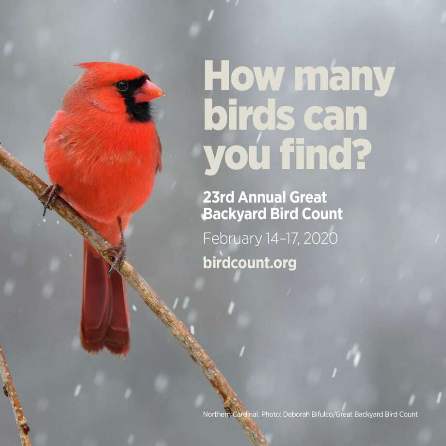 The Cos Cob Library in Greenwich is hosting a program Feb. 15 about winter bird watching and participation in the Great Backyard Bird Count. Photo: Deborah Bifulco / Great Backyard Bird Count