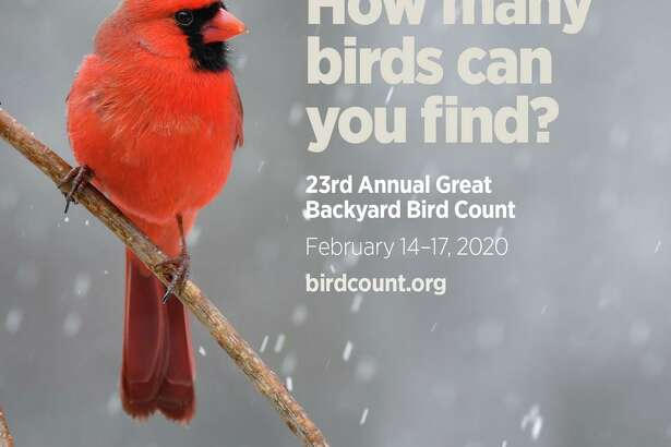 The Cos Cob Library in Greenwich is hosting a program Feb. 15 about winter bird watching and participation in the Great Backyard Bird Count.