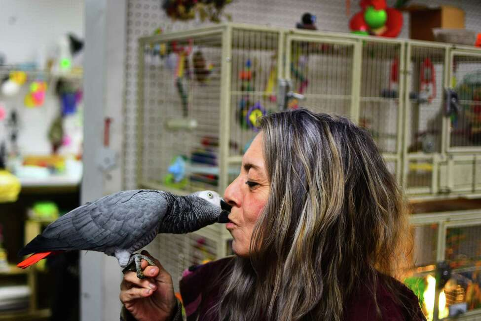Bobbie Berlin of Middleburgh shares a kiss with her African Grey parrot, Brooklyn, at the Rensselaer Bird Center in Rensselaer on Wednesday, Feb 12, 2020. Berlin drives an hour each way to bring Brooklyn for grooming at the store, where the bird was born.
