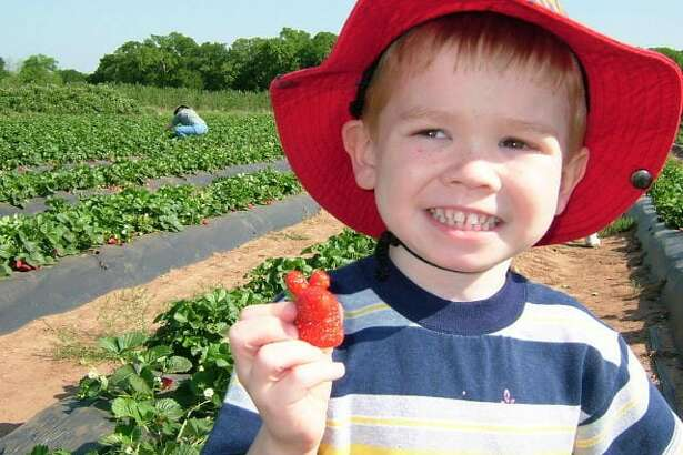 Sweet Berry Farms - Marble Falls No admission or parking fee, simply pay for the fruit you pick or the activities you wish to participate in. Strawberries (Mid March - May): $2.99 per pound