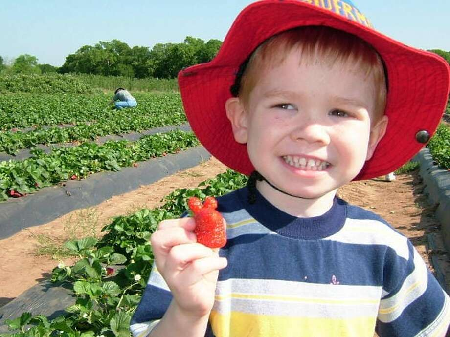 Sweet Berry Farms - Marble Falls No admission or parking fee, simply pay for the fruit you pick or the activities you wish to participate in. Strawberries (Mid March - May): $2.99 per pound Photo: Courtesy