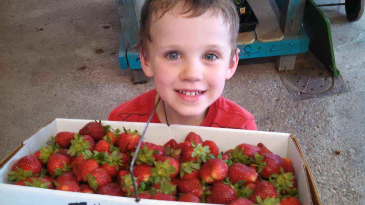 Jollisant Farms - Plantersville Our strawberry picking is fun for both adults and kids. Every season we have folks compliment us on the quality of our strawberries and the beauty of our farm. We usually have strawberries available February thru June.