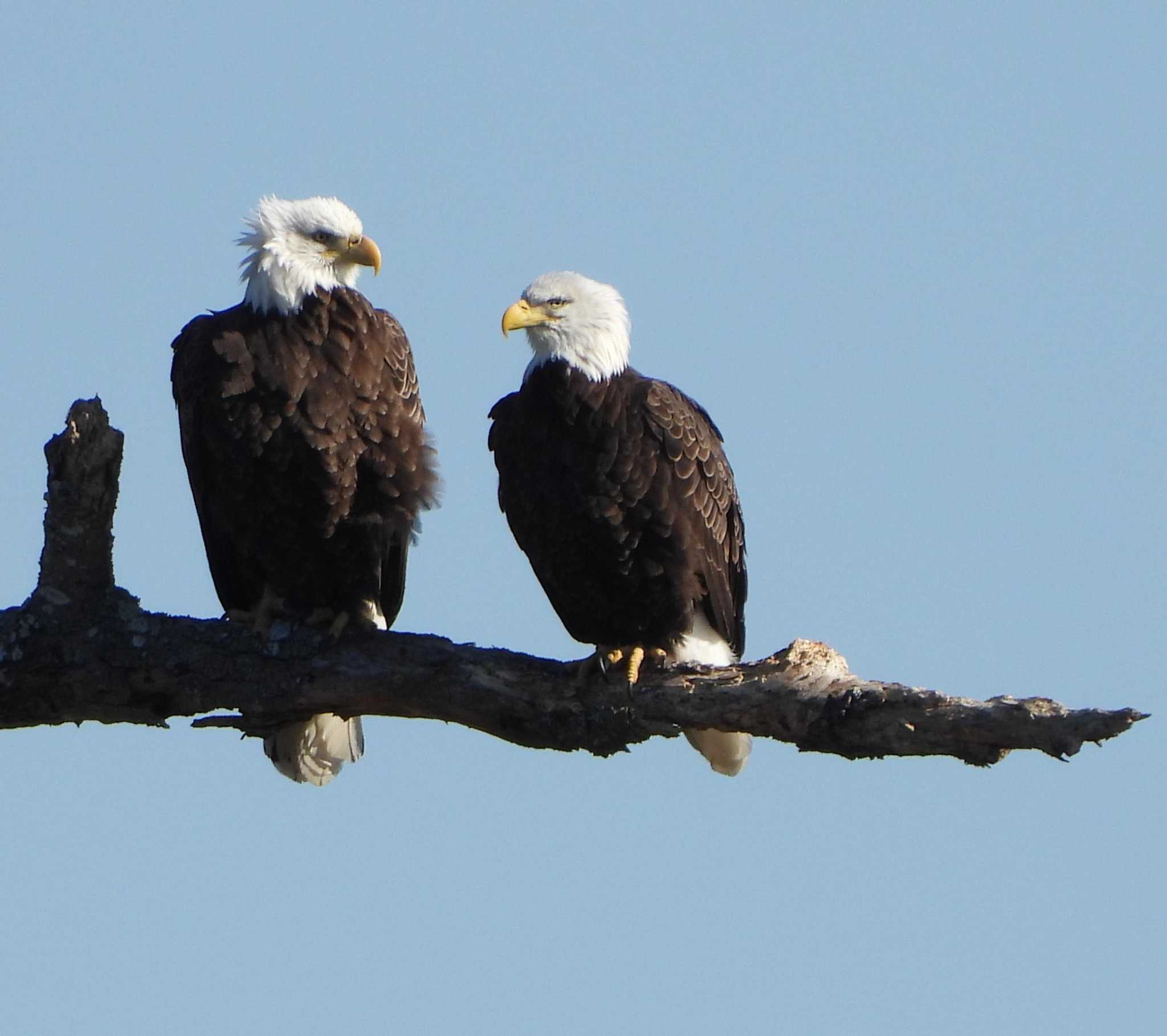 See bald eagles, wildlife on river cruises