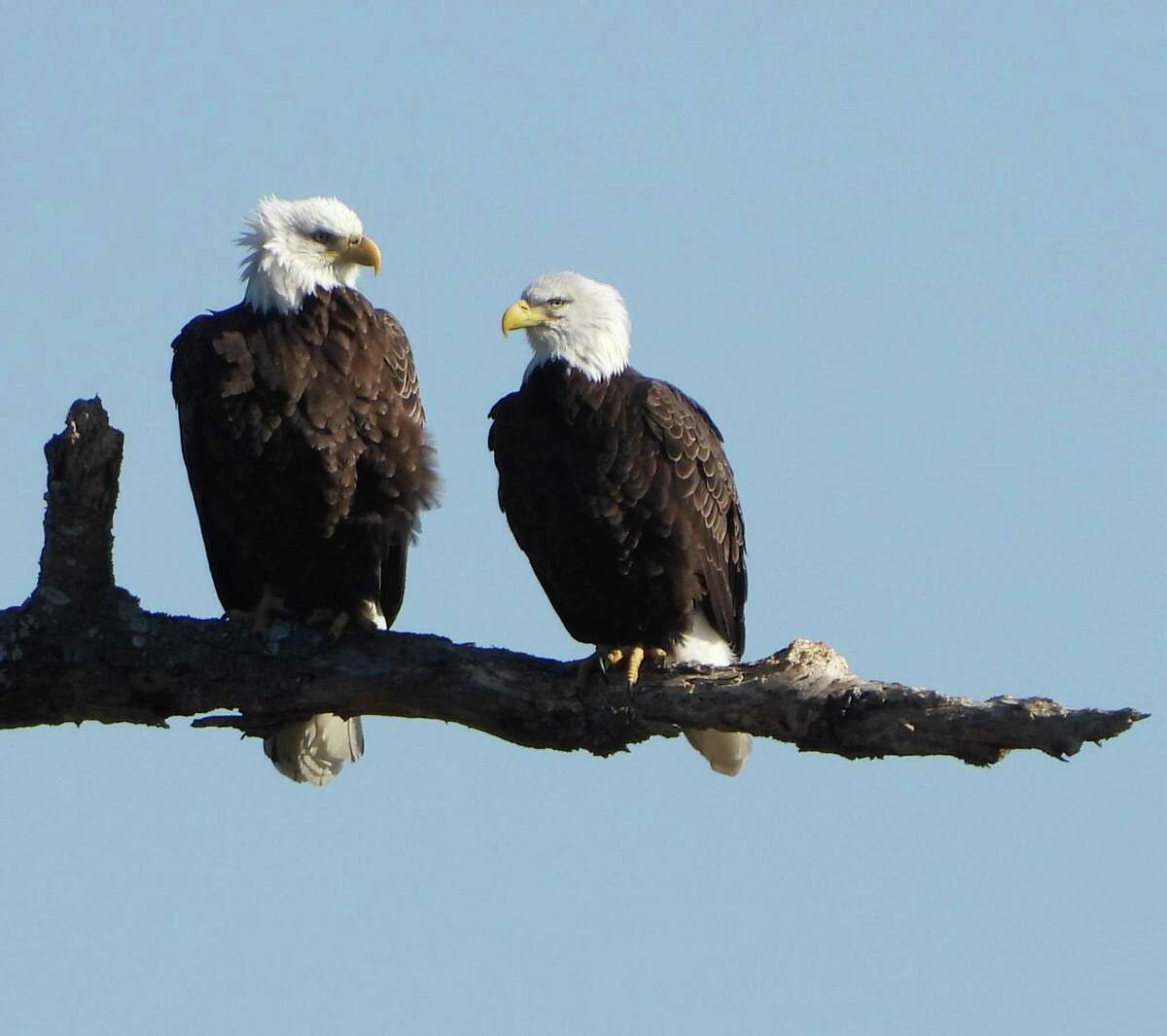 RiverQuest and the Connecticut River Museum are offering trips on the lower Connecticut River for Winter Wildlife Eagle Boat Cruises, through March 15.