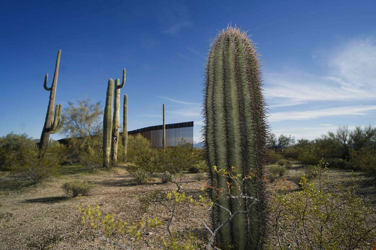 The United States-Mexico border wall is seen past cactuses in Organ Pipe National Park south of Ajo, Arizona, on February 13, 2020. - Construction of US President Donald Trump's border wall in the area has destroyed many species including the Organ Pipe Cactus. (Photo by SANDY HUFFAKER / AFP) (Photo by SANDY HUFFAKER/AFP via Getty Images)
