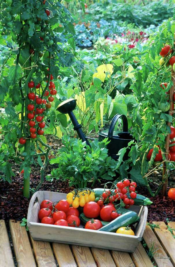 Growing a summer vegetable garden may sound fun, but it requires quite a bit of work. Photo: Frederic Didillon / Getty Images / Photolibrary RM