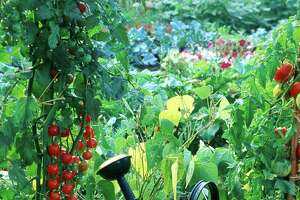 Growing a summer vegetable garden may sound fun, but it requires quite a bit of work.