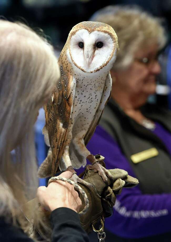 Owl Prowl is on Feb. 21 at 6 p.m. at the CT Audubon Society's Center at Fairfield, 2325 Burr St., Fairfield. For ages 8 and up to look for winter owls. Cost is $7-$10. Register online. For more information, visit ctaudubon.org. Photo: Arnold Gold / Hearst Connecticut Media / New Haven Register