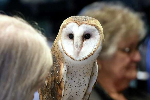 Owl Prowl is on Feb. 21 at 6 p.m. at the CT Audubon Society's Center at Fairfield, 2325 Burr St., Fairfield. For ages 8 and up to look for winter owls. Cost is $7-$10. Register online. For more information, visit ctaudubon.org.