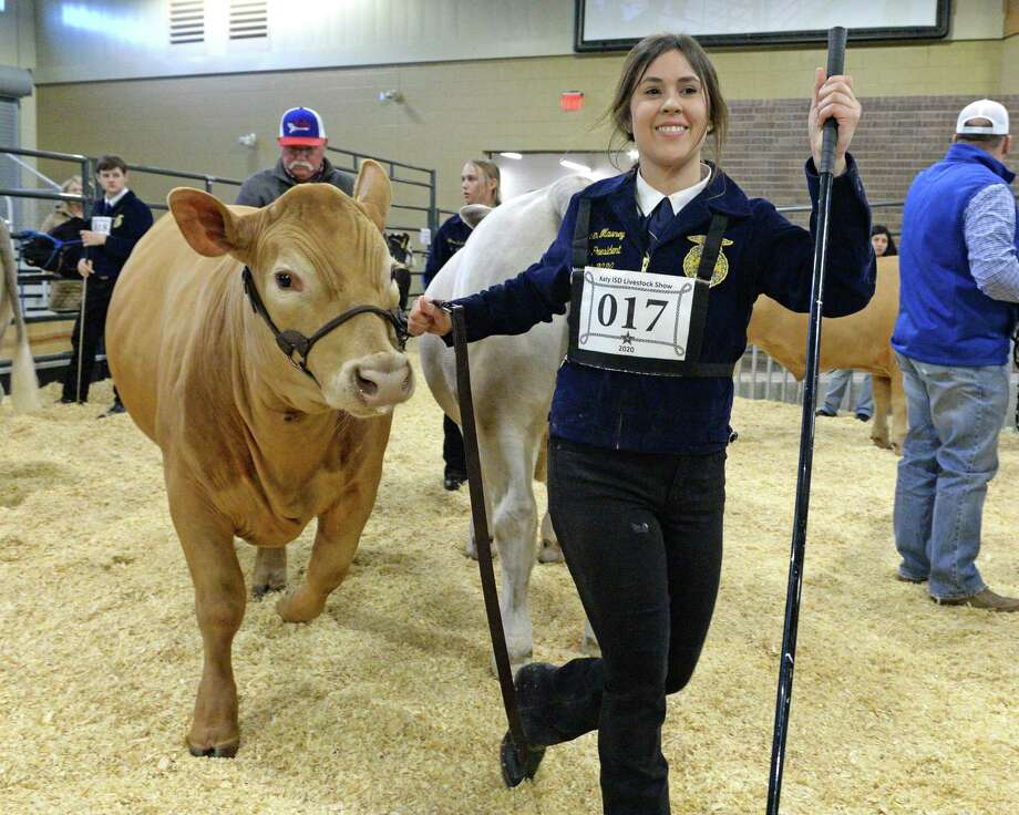 Lauren Mauney of Tompkins High School shows her steer during the 77th Annual Katy ISD FFA Livestock Show and Katy Rodeo at the Gerald D. Young Agricultural Sciences Center in Katy on Thursday, February 13. Photo: Craig Moseley, Houston Chronicle / Staff Photographer / ©2020 Houston Chronicle