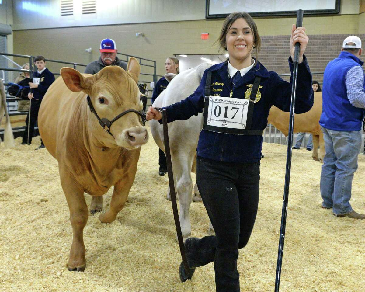 While RodeoHouston has been canceled for 2021, the youth programs are still moving forward. Some Katy Independent School District FFA and art students are planning to participate. Here, Lauren Mauney from Tompkins High School shows her steer during the 77th Annual Katy ISD FFA Livestock Show and Katy Rodeo at the Gerald D. Young Agricultural Sciences Center in Katy on Thursday, February 13, 2020.