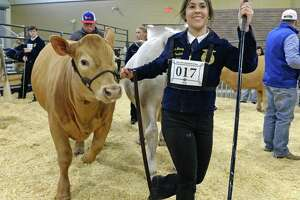 Lauren Mauney of Tompkins High School shows her steer during the 77th Annual Katy ISD FFA Livestock Show and Katy Rodeo at the Gerald D. Young Agricultural Sciences Center in Katy on Thursday, Feb. 13.
