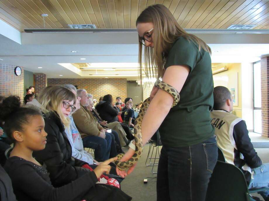 Lindsey Harrell holds out a western fox snake for people to pet during Snakes Alive! on Saturday, Feb. 15 at the Chippewa Nature Center. Photo: Victoria Ritter/vritter@mdn.net